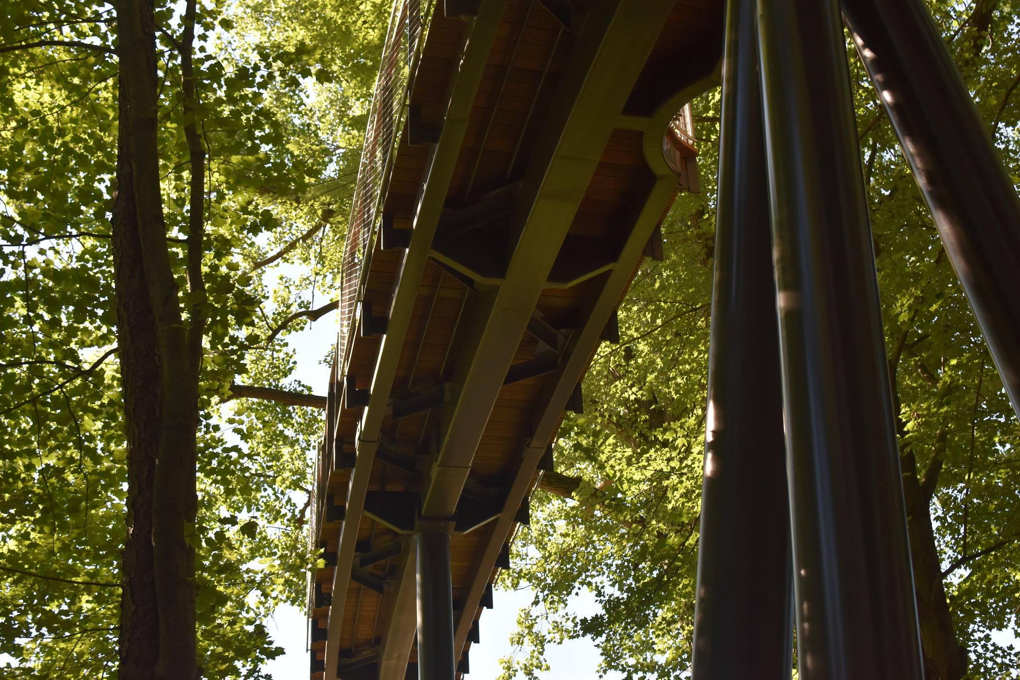 Whiting Forest of Dow Gardens Canopy Walk, An Adco Detailing Project, winner of the 2020 SDS2 Solid Steel Awards in Commercial, Small tonnage. Photo courtesy of Dow Gardens.